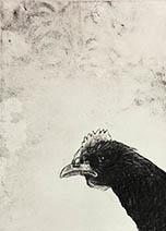 Jim Kay | The Chicken
