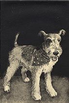Jim Kay | Biff, the Wonderdog