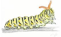 Jim Kay | Bugs: Caterpillar holding on tight