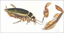 Jim Kay | Bugs: Diving beetle