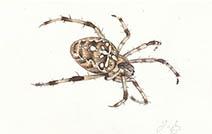 Jim Kay | Bugs: Garden spider