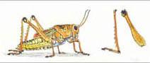 Jim Kay | Bugs: Grasshopper making music