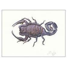 Jim Kay | Bugs: Scorpion