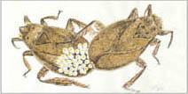 Jim Kay | Bugs: Giant water bugs