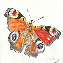 Jim Kay | Bugs: Butterfly