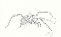 Jim Kay | Bugs: House spider