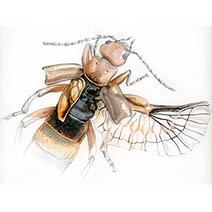 Jim Kay | Bugs: Earwig